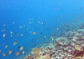 Surf-Villa-Maldives_Himmafushi (81)
