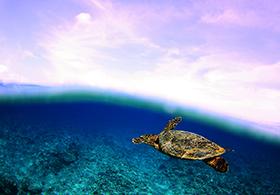 Surfing-Maldives-Himmafushi-Surf-Villa_ (4)